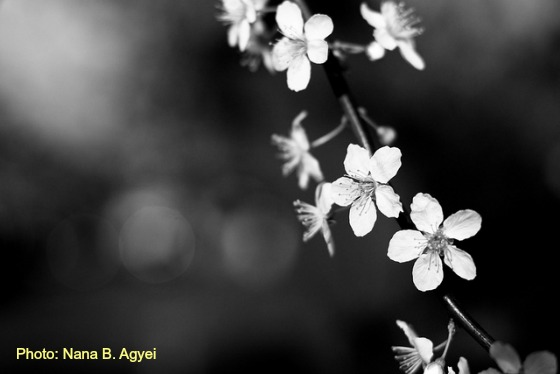 B & W Flower